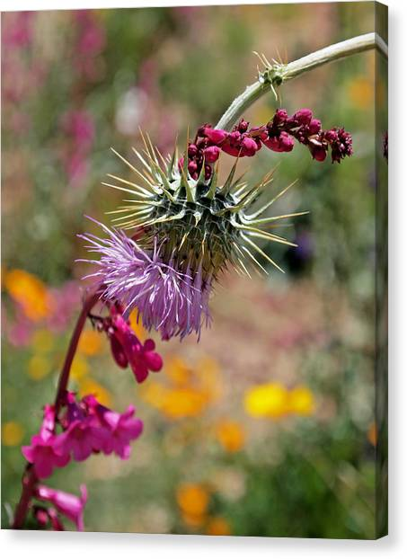 Snapdragons Canvas Print - Thistle And Penstemon by Rona Black