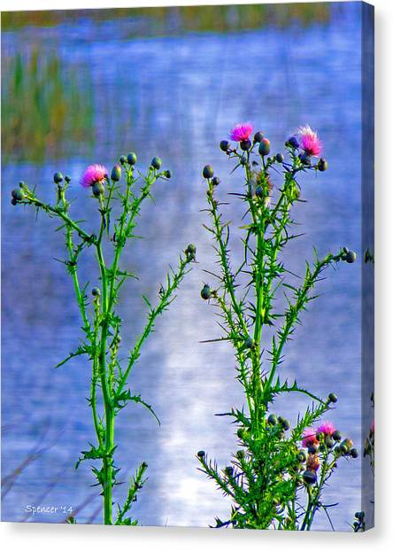Thistle Canvas Print by T Guy Spencer