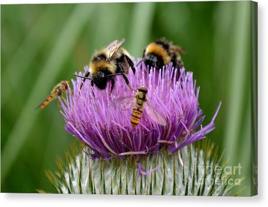 Canvas Print featuring the photograph Thistle Wars by Scott Lyons