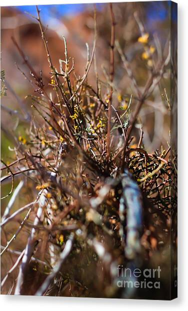 Thorns On Fence Canvas Print