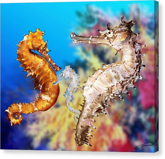 Thorny Seahorse Canvas Print by Owen Bell
