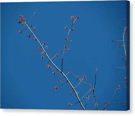 Threads And Buds Canvas Print