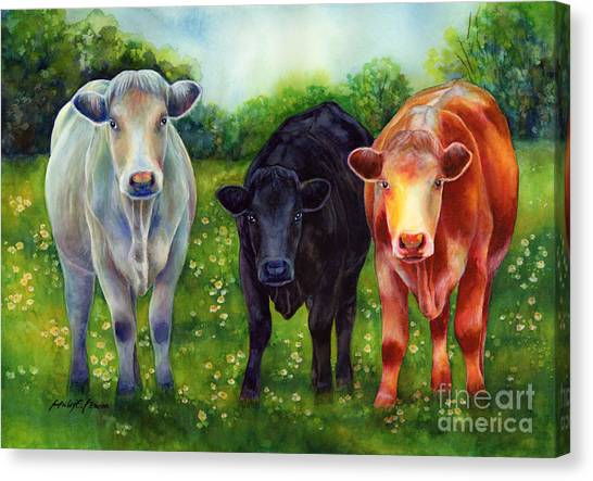 Cow Farms Canvas Print - Three Amigos by Hailey E Herrera