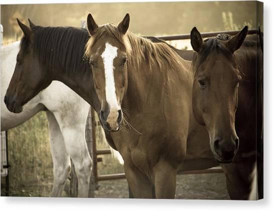 Brown Ranch Trail Canvas Print - Three Amigos by Steven Bateson