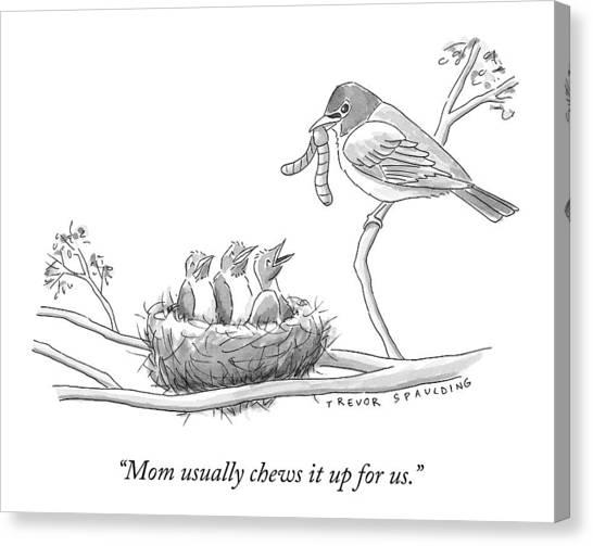 Three Baby Birds In A Nest Talk To A Grown Bird Canvas Print