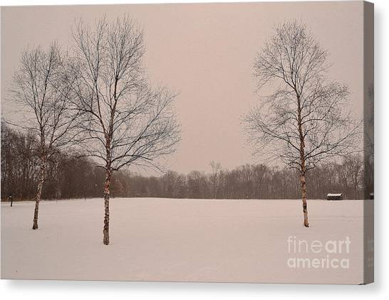 Three Birch Trees In Winter Canvas Print