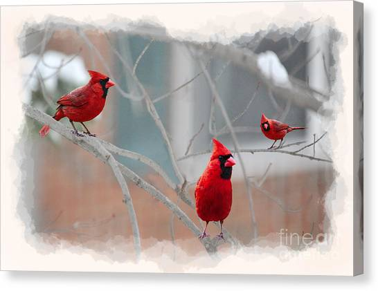 Three Cardinals In A Tree Canvas Print