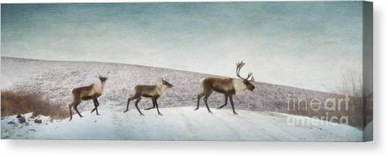 Tundras Canvas Print - Three Caribous by Priska Wettstein