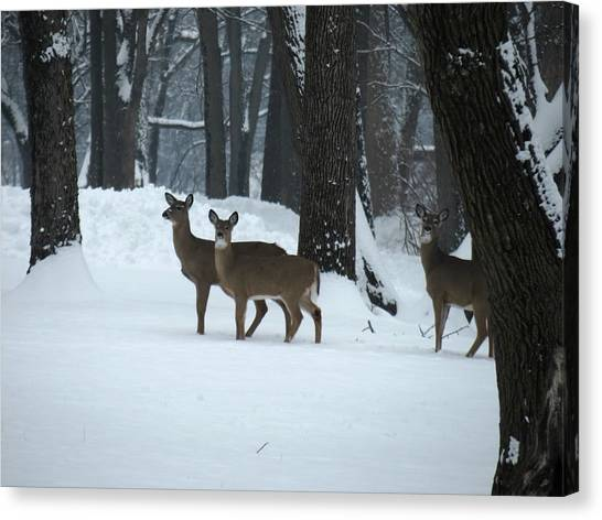 Three Deer In Park Canvas Print