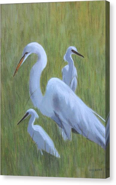 Three Egrets  Canvas Print