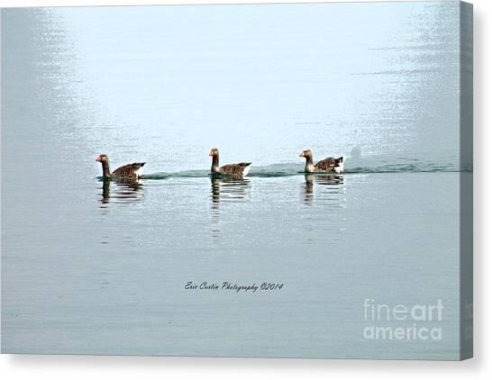Three Geese A Swimmin Canvas Print by Eric Curtin