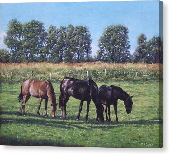 Three Horses In Field Canvas Print