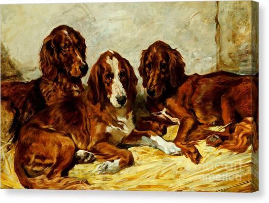 Doggy Canvas Print - Three Irish Red Setters by John Emms