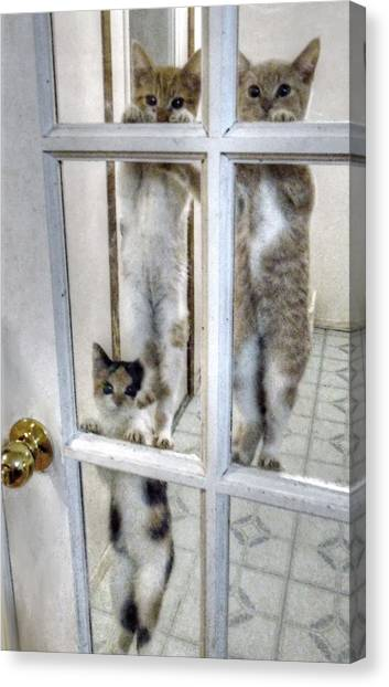 Three Kitten Door Deco Canvas Print