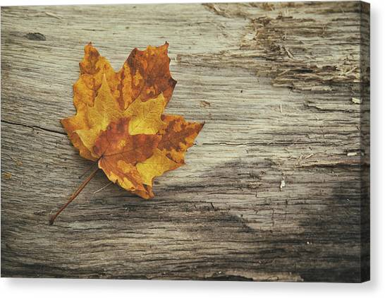 Maple Leaf Art Canvas Print - Three Leaves by Scott Norris