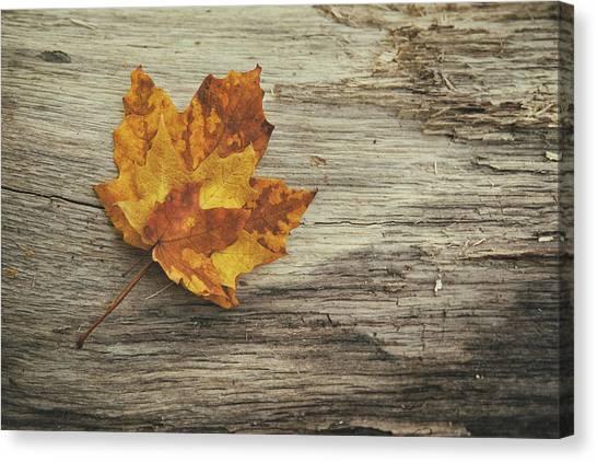 Log Canvas Print - Three Leaves by Scott Norris