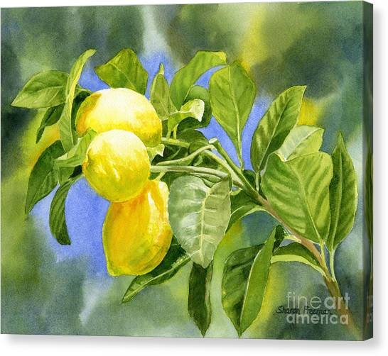 Lemons Canvas Print - Three Lemons by Sharon Freeman