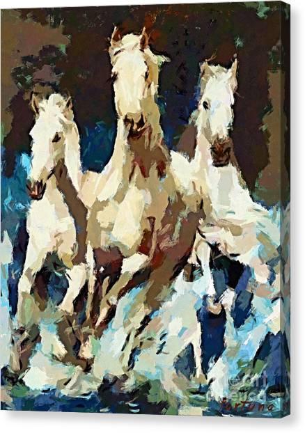 Three Lipizzans Canvas Print