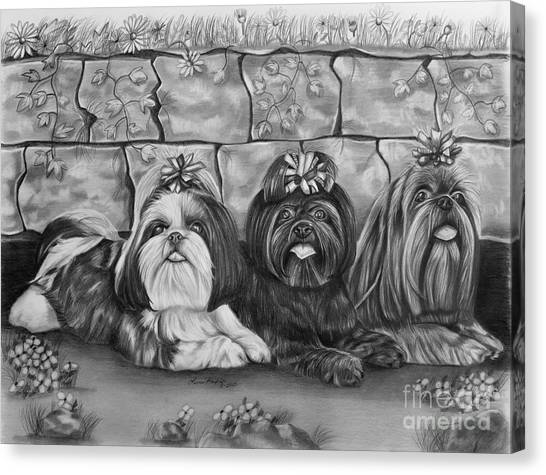Shih Tzus Canvas Print - Three Little Shih Tzus by Lena Auxier