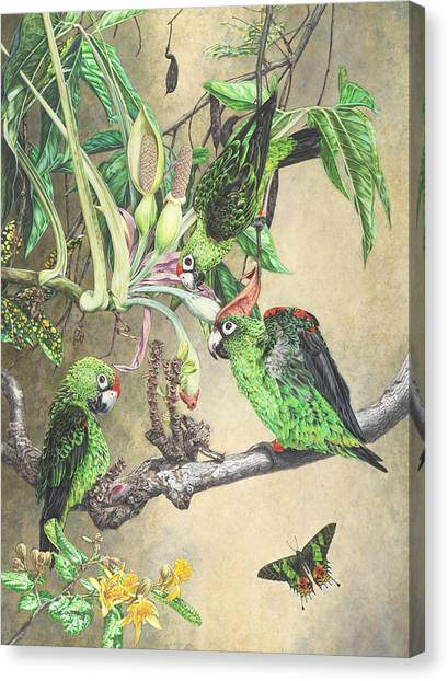 Three Loves - Print Canvas Print by Carole Niclasse