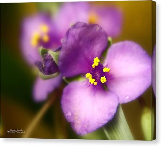Three Petals Of Purple Canvas Print by Alexandra  Rampolla
