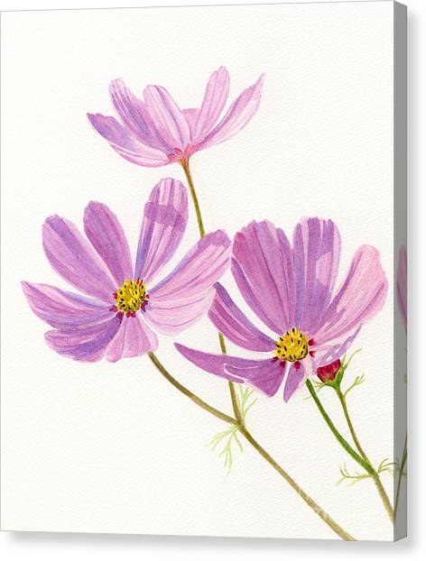 Cosmos Flower Canvas Print - Three Pink Cosmos Blossoms by Sharon Freeman