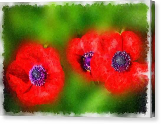 Three Red Popies  Canvas Print