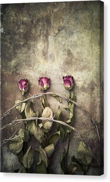 Three Roses And Barbed Wire Canvas Print