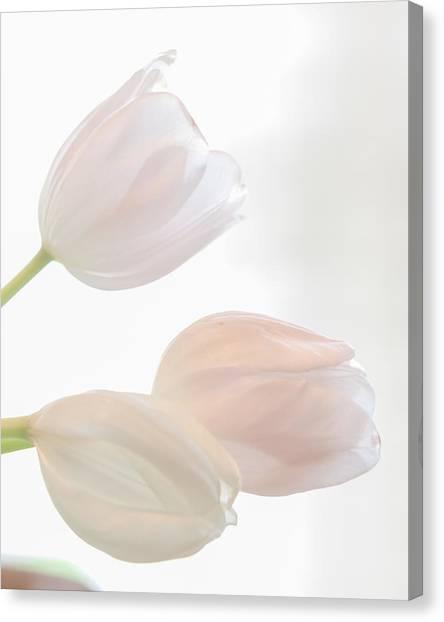 Three Sisters Reversed Canvas Print