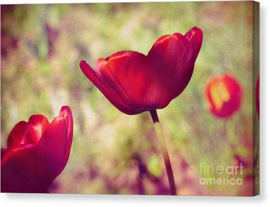 Three Tulips Canvas Print