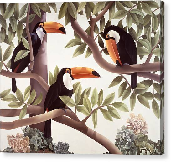 Toucans Canvas Print - Threecans  by Laura Regan