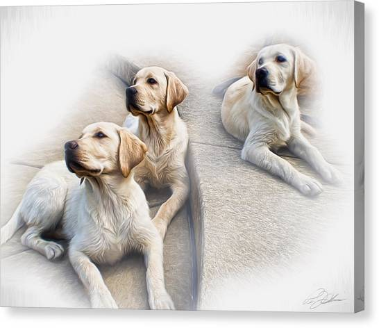 Yellow Lab Canvas Print - Three's Company by Peter Chilelli