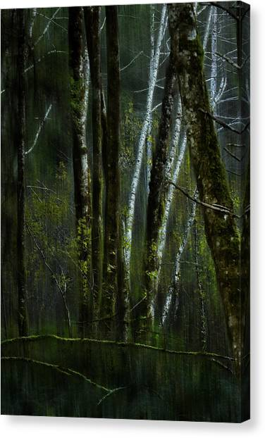 Canvas Print featuring the photograph Through A Glass . . . Darkly by Belinda Greb