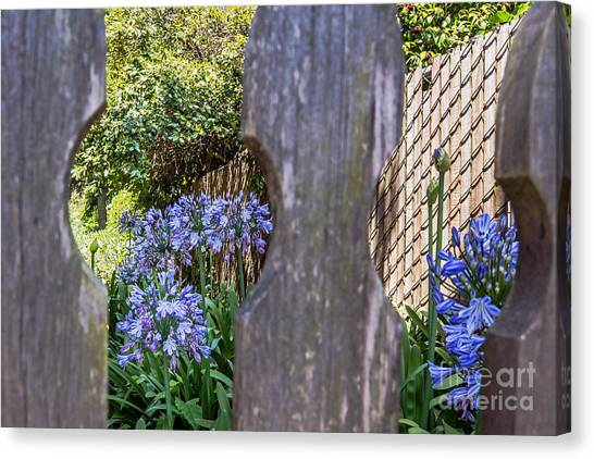 Through The Fence Canvas Print