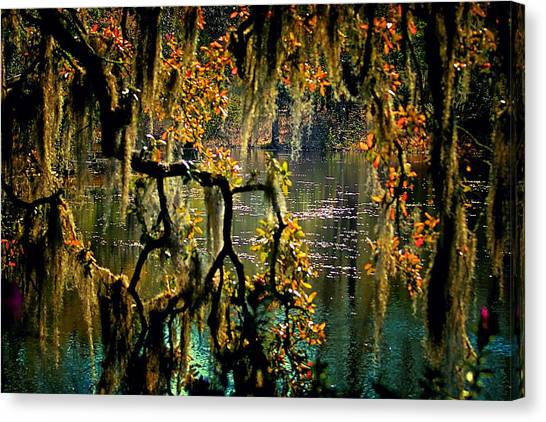Through The Moss Canvas Print