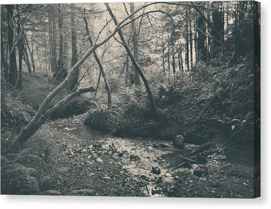 Redwood Forest Canvas Print - Through The Woods by Laurie Search