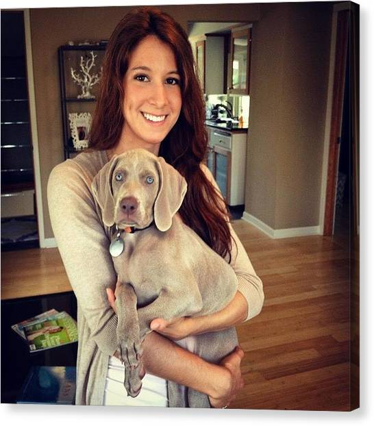 Weimaraners Canvas Print - Throwback To Stella's Baby Days by Kristin Kroening