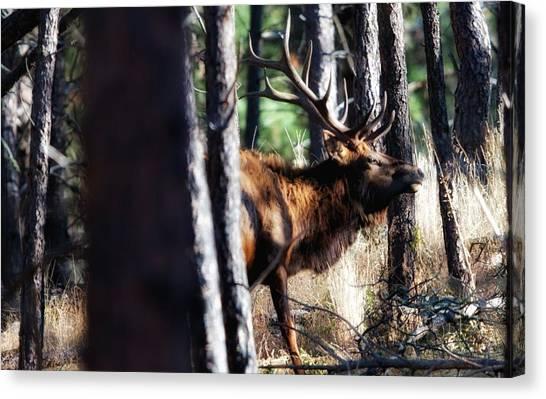 Thru The Trees Canvas Print