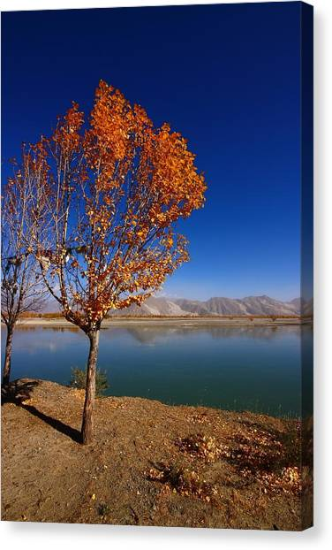 Himalayas Canvas Print - Tibetan Golden Tree by FireFlux Studios