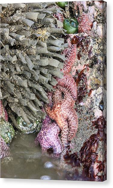 North Rim Canvas Print - Tidal Beach With Sea Stars by Tom Norring