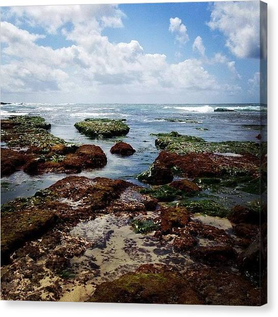 Ocean Life Canvas Print - Tide Pools by Go Inspire Beauty