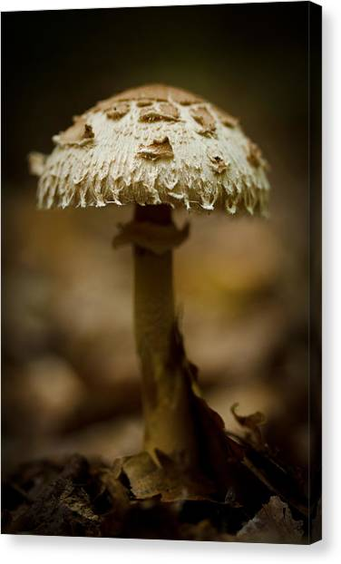 Tiffany Shroom Canvas Print