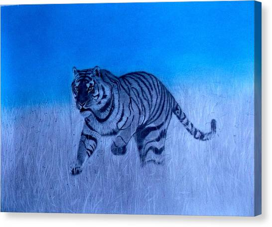 Tiger And Blue Sky Canvas Print