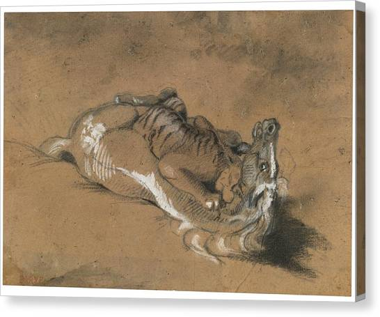Tiger Attacks A Horse Canvas Print - Tiger Attacking A Horse by Celestial Images