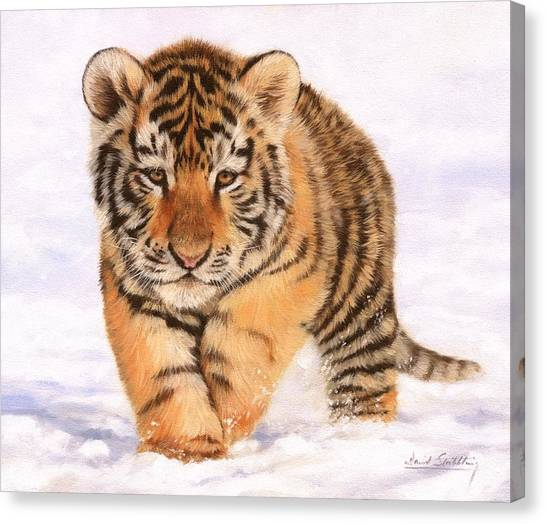 Siberian Canvas Print - Tiger Cub In Snow Painting by David Stribbling