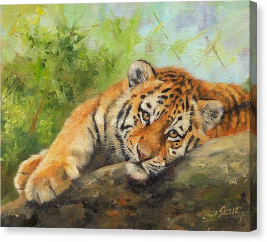 Siberian Cats Canvas Print - Tiger Cub Resting by David Stribbling