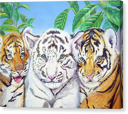 Tiger Cubs Canvas Print