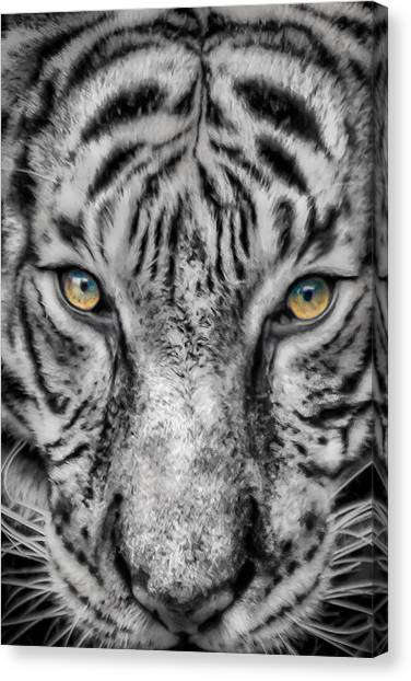 Tiger Eyes Canvas Print by James Woody