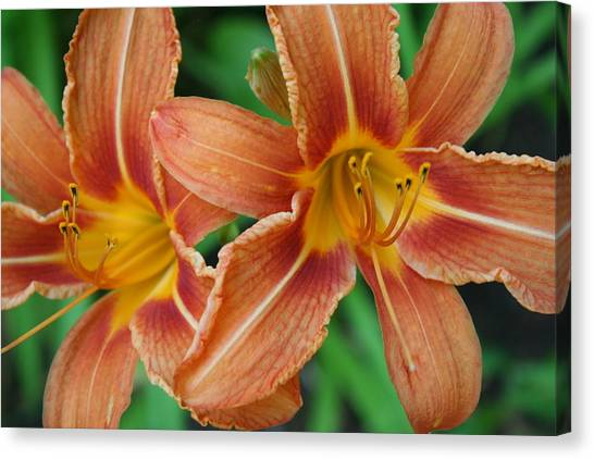 Tiger Lily 3 Canvas Print