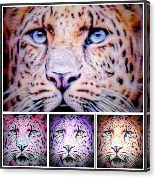 Floss Canvas Print - •tiger Multi•  #tiger #cat by Candy Floss Happy
